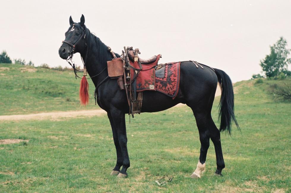 Dzisiaj na Partynicach odszedł Damar, koń Bohuna zfilmu 'Ogniem imieczem'