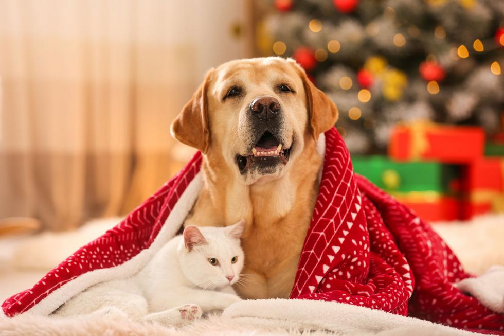 Czy zwierzęta lubią święta?